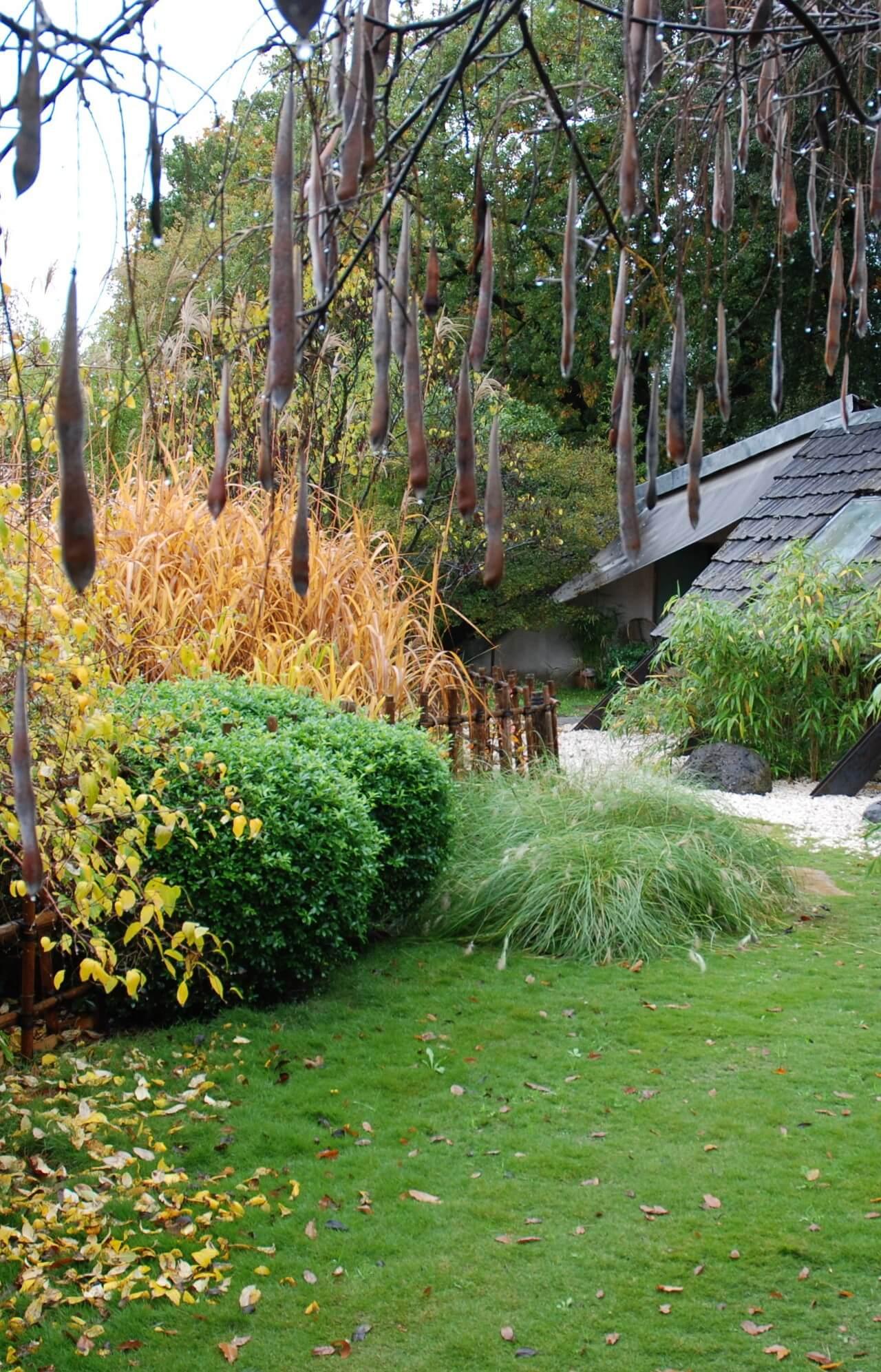 Couleur et feuilles jardin d'automne, clôture et treille en bambou d'inspiration japonaise, graines de glycine, jardin écologique.