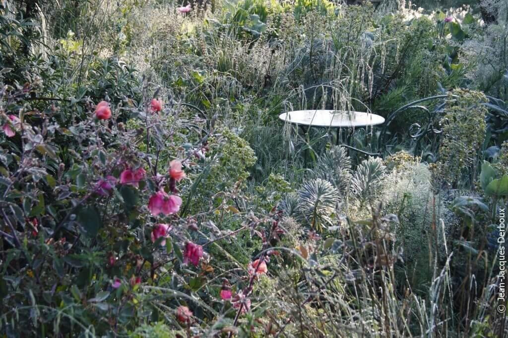 Jardin romantique sans arrosage, fleurs, rosiers, mobilier ancien en métal.